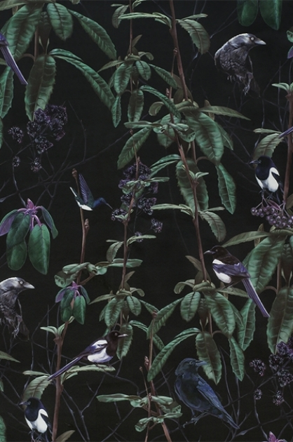 cutout Image of Witch & Watchman Folia Wallpaper - Dark dark green foliage and purple berries on black background