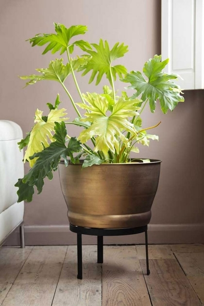 Lifestyle image of brass effect planter on its stand with wooden flooring and pale wall background
