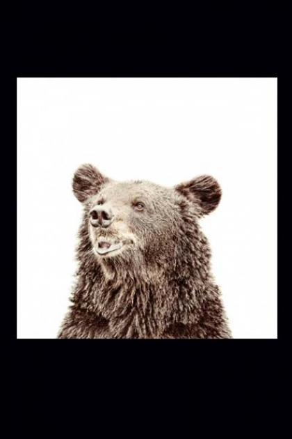 Magnet-Friendly Magnetic Wallpaper - Bear - 2 Sizes Available