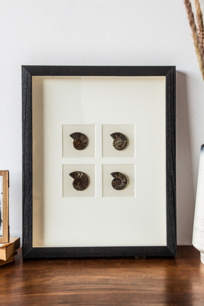 Lifestyle image of the Modern Fossilised Nautilus Framed Art sat in a cabinet