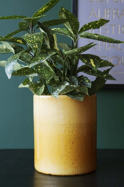Glowing Amber Plant Pot