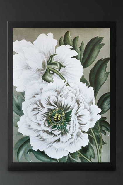 Image of Snow White Wild Rose Art Print Poster framed and hanging on a wall