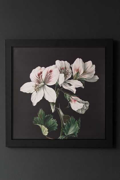 Unframed Dark Peruvian White Lily Art Print