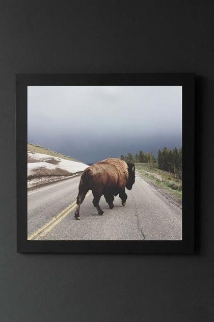 lifestyle image of Unframed Street Walker Fine Art Print buffalo walking down road in black frame on dark wall background