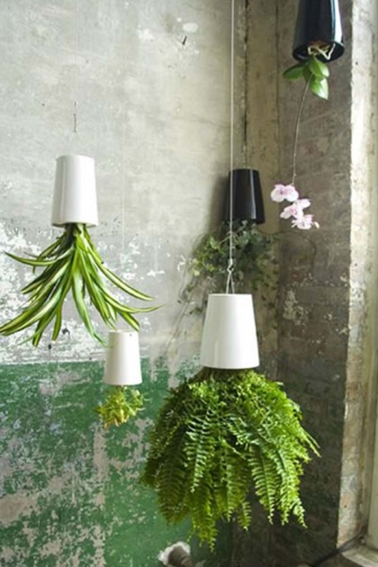 Sky Planter for Large House Plants