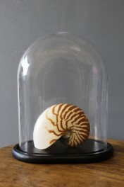 Oval Display Dome With Black Base