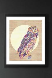 Unframed Owl Fine Art Print