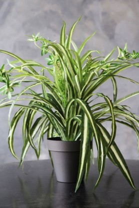 lifestyle image of Faux Potted Spider Plant on black table with grey wall background