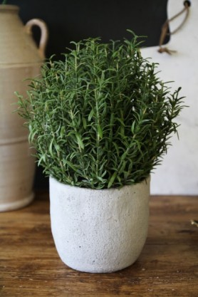 lifestyle image of Rosemary Bush In Grey Cement Pot on wooden table with brown vase and white board
