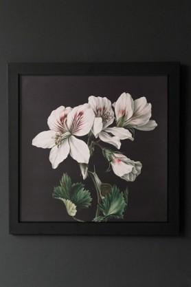 Unframed Dark Peruvian White Lily Art Print