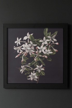 Unframed Pretty Floral Azalea Art Print
