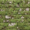Koziel Moss White Brick Wallpaper