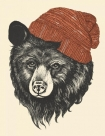 Unframed Zissou the Bear Fine Art Print