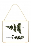 Brass Picture Frame With Chain - Landscape 30x24cm cutout image with leaves in frame