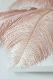 Close-up of a feather on the Fabulously Fantastic Pink Ostrich Feather Tree