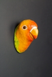 Angled image of the King Parrot Wall Mounted Decoration