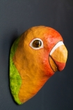 Side-angle image of the King Parrot Wall Mounted Decoration