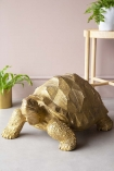 lifestyl eimage of the Large Gold Tortoise Display Ornament  with wooden side table and house plants on pale flooring and wall background