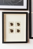 Lifestyle image of the Modern Fossilised Nautilus Framed Art hung on a wall