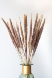 Lifestyle image of the Set Of 6 Stems Of Natural Coloured Pampas Reeds