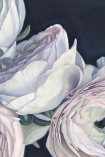 "Close-up detail image of the Unframed Art Print by Amy Carter ""Amour"" pale pink roses on navy blue background"