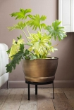 Lifestyle image of brass effect planter on its stand