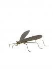 cutout image of Brass Fly Ornament on white background