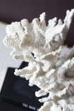 Close-up detail image of the Faux Pure White Coral Ornament on top of pile of books and dark purple wall background