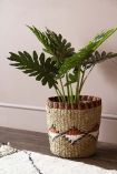 Faux Philodendron Jungle Plant