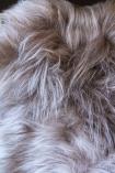 detail image of Genuine Icelandic Long Wool Sheepskin - Taupe