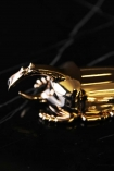 detail image of head of Gold Insect Beer Bottle Opener on black marble table