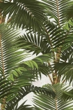 detail image of Mind The Gap Jardin Tropical Wallpaper green palm leaves and brown trunks on pale background repeated pattern