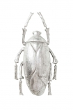 cutout image of Silver Plant Beetle On White Background