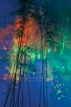 detail image of Elli Popp See Into The Trees Wallpaper - Nighttime orange and green northern lights with black tree silhouettes and blue background