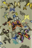 detail image of Christian Lacroix Butterfly Parade Wallpaper - Platine PCL008/05 - ROLL coloured butterflies on khaki background repeated pattern