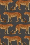 cutout image of Cole & Son - The Ardmore Collection - Leopard Walk - 190/2008 orange leopards repeated pattern on dark grey background