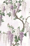 Sample image of the Wisteria Lilac Wallpaper by Pearl Lowe pueple and lilac wisteria flowers with green leaves and brown branches on pale background