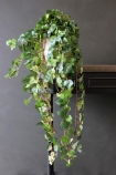 lifestyle image of Fabulous Faux Trailing Ivy Posy in white pot on wooden shelf and dark wall background