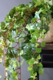 detail image of leaves on Fabulous Faux Trailing Ivy Posy in white pot on wooden shelf and dark wall background