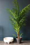 Faux Potted Areca Palm on dark blue background lifestyle image