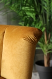 detail image of the top of Gallery Velvet Cocktail Chair - Golden Glow with plant in background