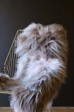lifestyle image of Genuine Icelandic Long Wool Sheepskin - Taupe on midas chair and dark wall background
