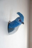 Side angle image of the Blue Jay Bird Wall Mounted Decoration