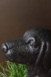 detail image of face on Cumberland The Sausage Dog Bench with plant and dark brown wall background