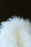 detail image of Genuine Icelandic Long Wool Sheepskin - Natural White with dark wall background