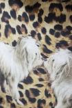 Leopard Print TigerDog Velvet Cushion