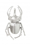 Silver Atlas Beetle On White Background