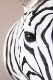 Zebra Head Wall Art
