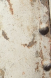 detail image of Koziel Rusted Metal Plate Wallpaper pale distressed metal