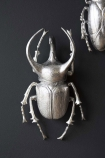 lifestyle image of Silver Atlas Beetle Wall Art Decoration Hung On dark Wall with second beetle in background